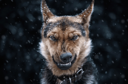 marijuana stories drug-sniffing dog