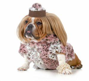 fashiondog