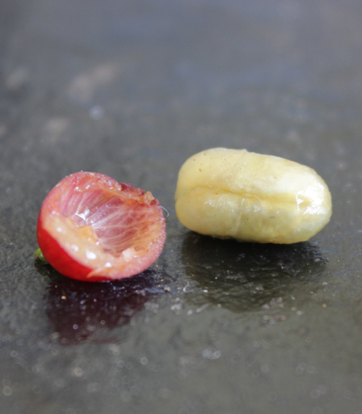 inside of the coffee cherry