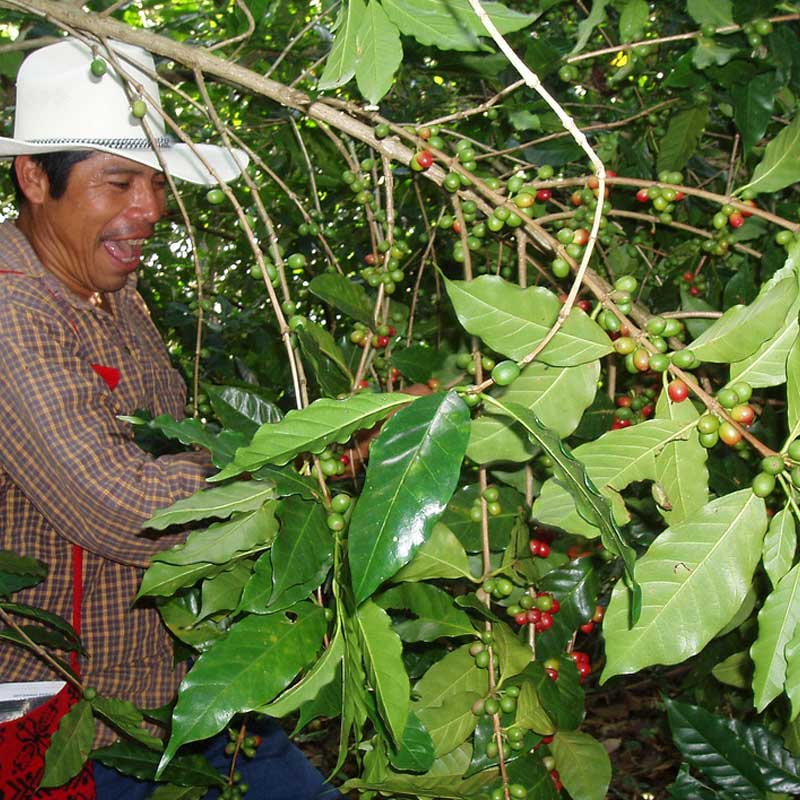 happy-coffee-farmer