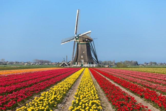 A replica windmill may be beyond the budget, but a small garden may be reasonable.