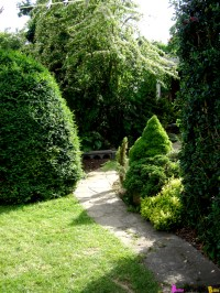 Backyard Garden Ideas Plants Photograph | Bringing Privacy t