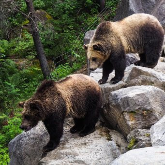 """Canadian Population Growth Has Real Estate """"Bears Watching"""": BMO"""