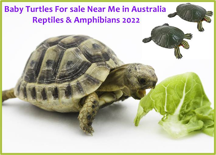 Turtles For sale Near Me