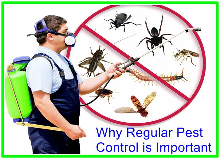 Why Regular Pest Control is Important
