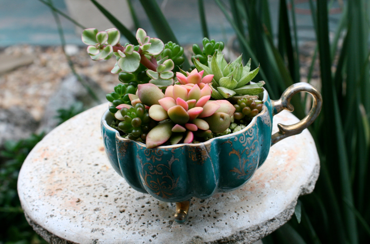 Everything You Need to Know About Succulents  Better