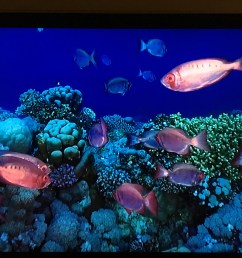 screen capture image of moontail bullseyes swimming in a coral reef via at t u [ 4032 x 3024 Pixel ]