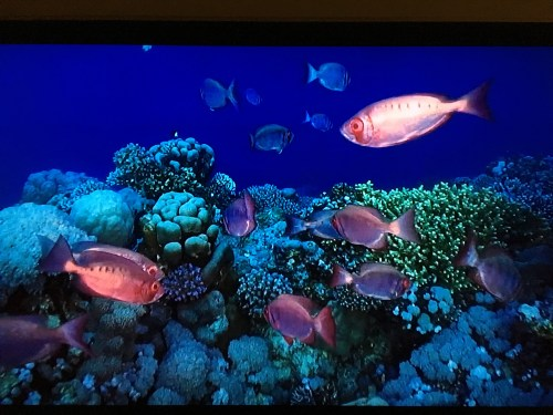 small resolution of screen capture image of moontail bullseyes swimming in a coral reef via at t u