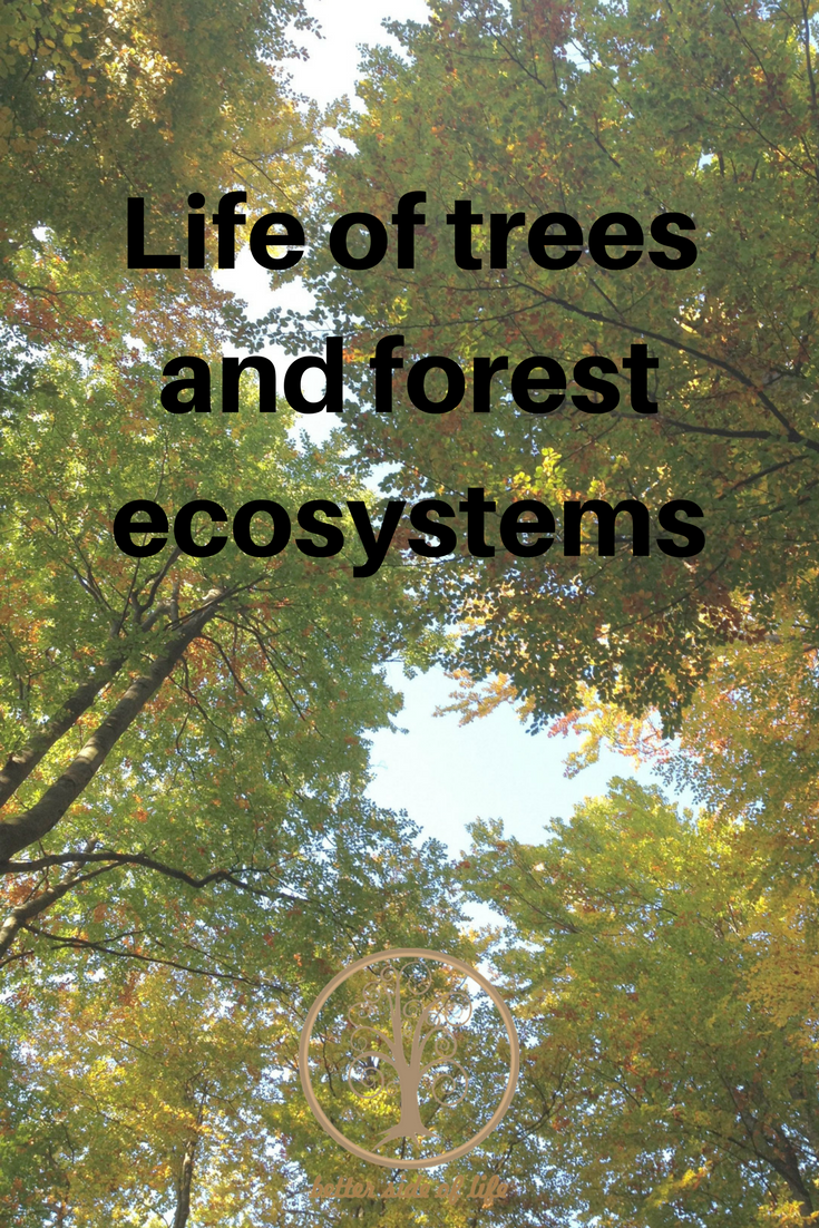 Life of trees and forest ecosystems