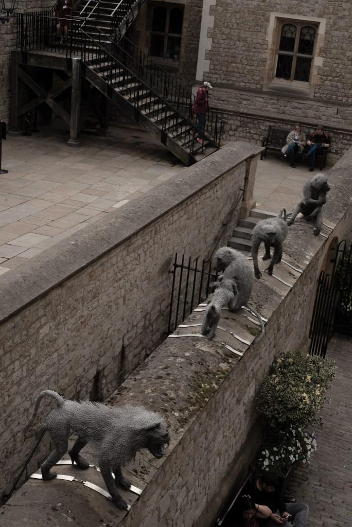 monkey in Tower of London