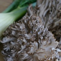 Sautéed Fennel and Maitake Mushrooms