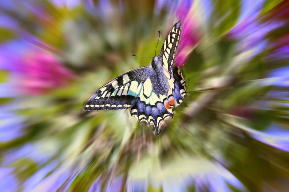 butterfly-789837_1920
