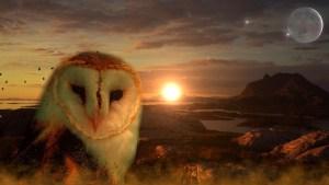 owl-711601_1280