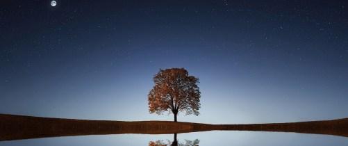 cropped-tree-838667_1280.jpg