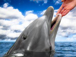 dolphin-1547320_1280