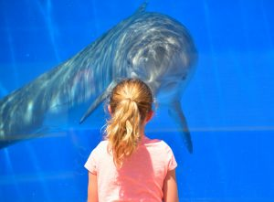 dolphin-1548448_1280