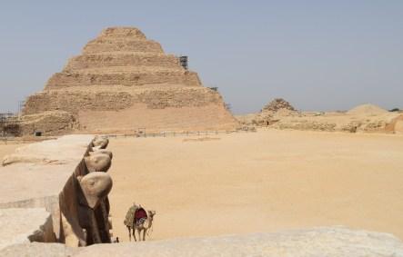 cobras, camel and step pyramid