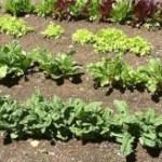 Organic Gardening and Eating According to the Word of God