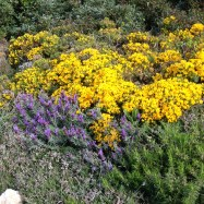 Wild flowers in Portugal