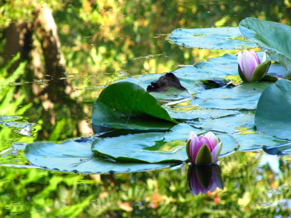 The lily pond at Claude Monet's garden in Giverny.