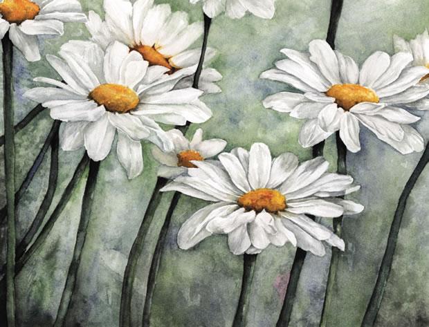 Karen's daisies