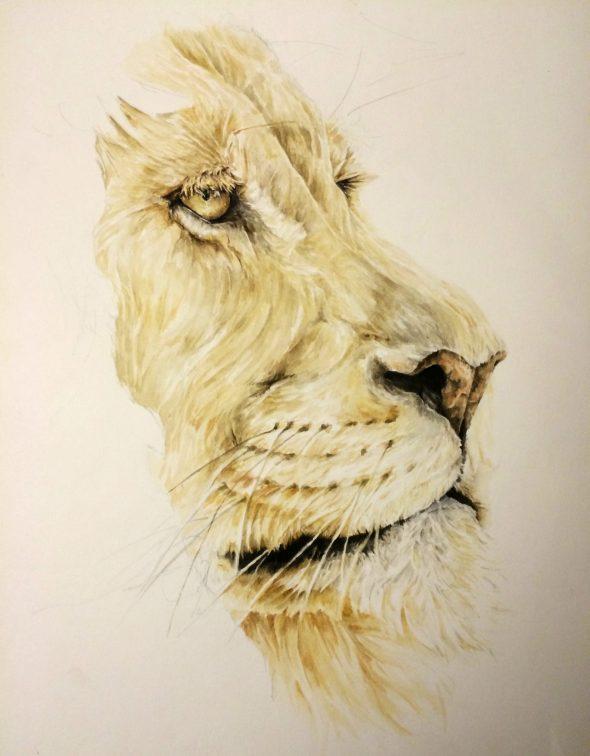 The Lion, Progress shot #3.