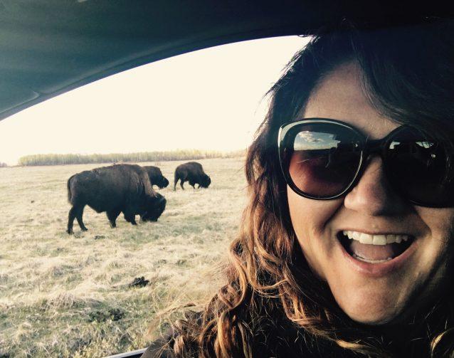 Bison buddies. Lake Audy, Riding Mountain National Park