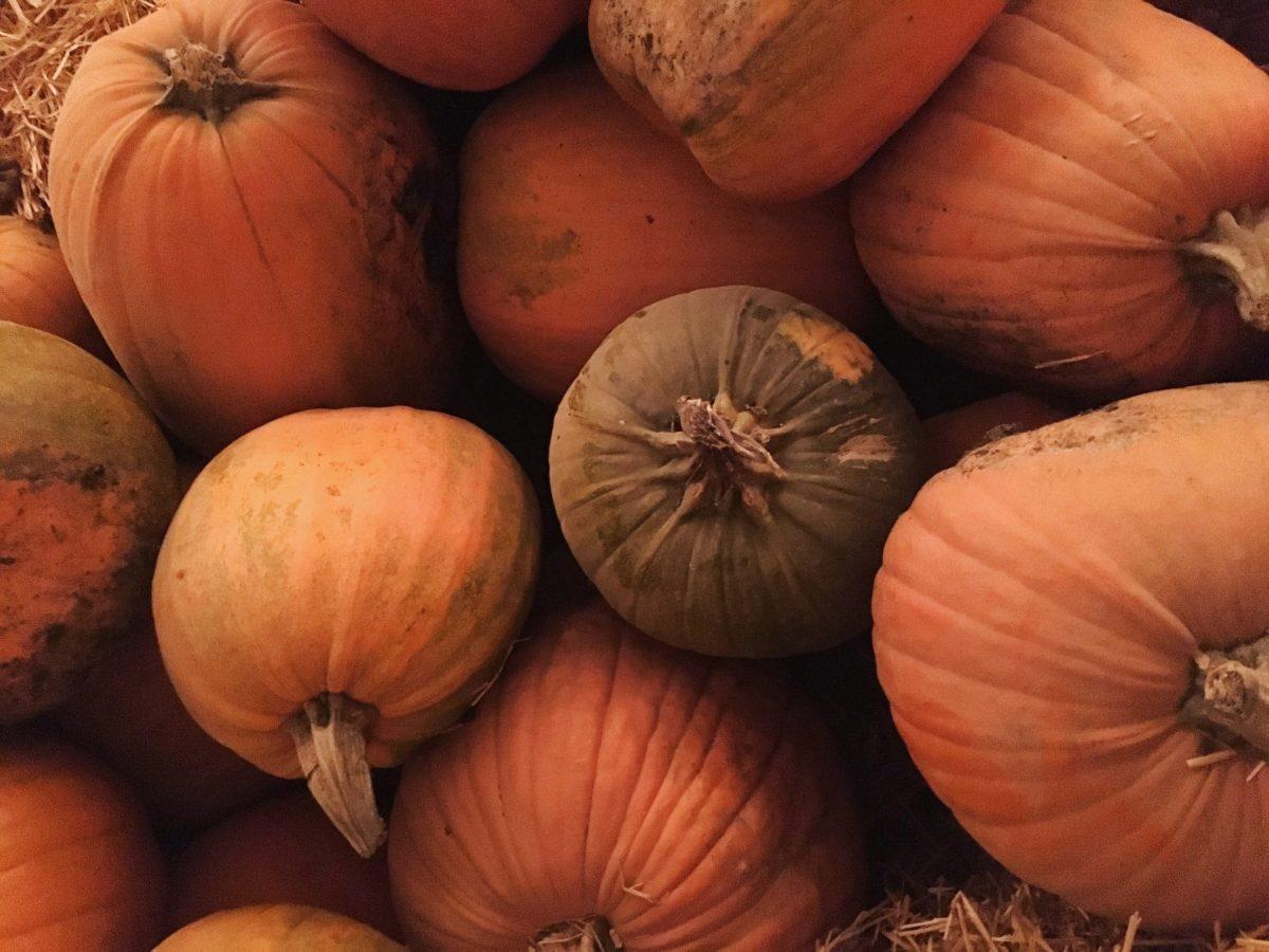 Faded pumpkins