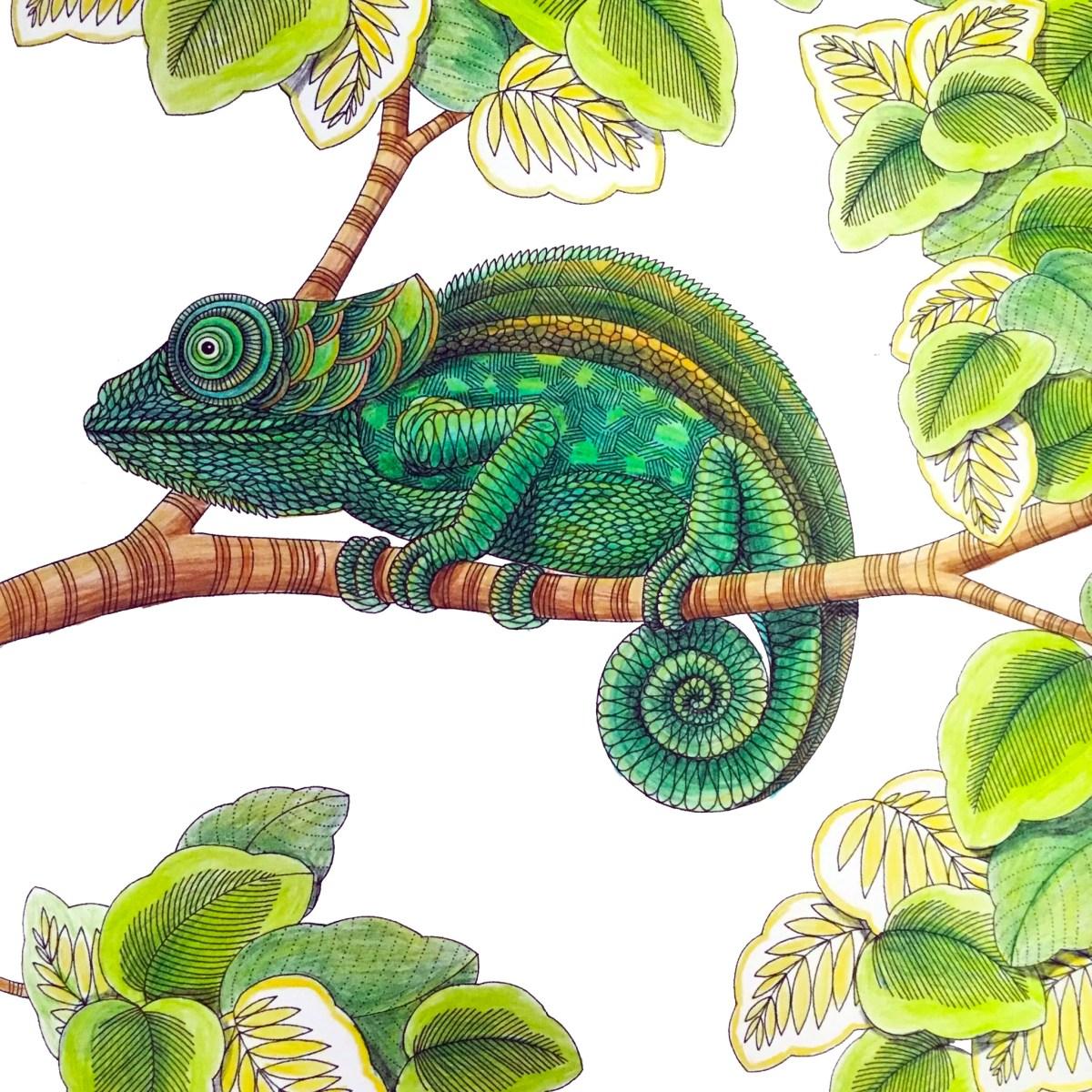 Chameleon, Animal Kingdom by Millie Marotta