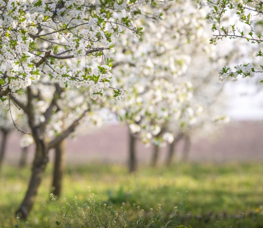 The Trees and You: Three relationship tips in honor of Tu B'Shvat