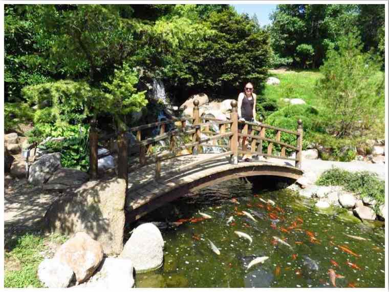 Dubuque Arboretum Koi Pond and Waterfall