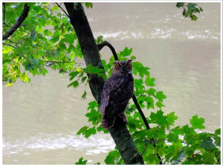 Wisconsin Ice Age Trail Owl