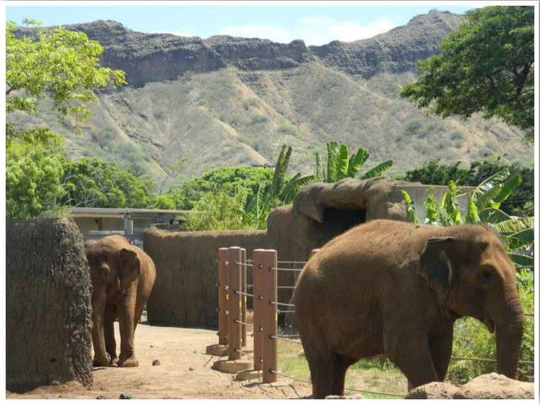 Honolulu Zoo Oahu Hawaii