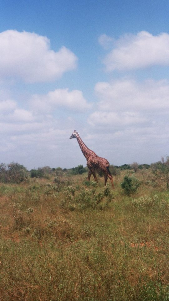 Kenya Tsavo East National Park
