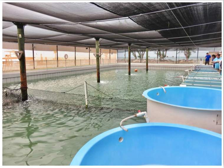 The Turtle Hospital Salt Water Pool Marathon FL
