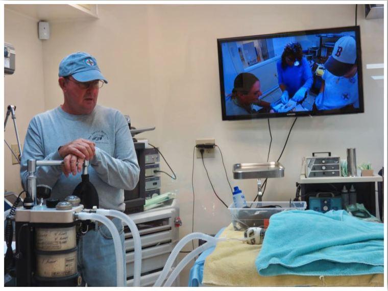 The Turtle Hospital Marathon Florida Surgery Room
