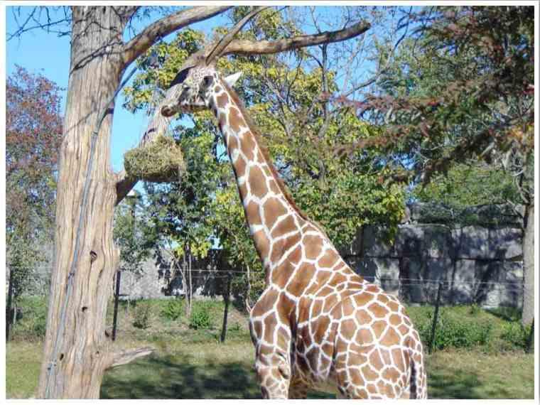 Indianapolis Zoo - Photo credit: Lori, Maps Memories and Motherhood