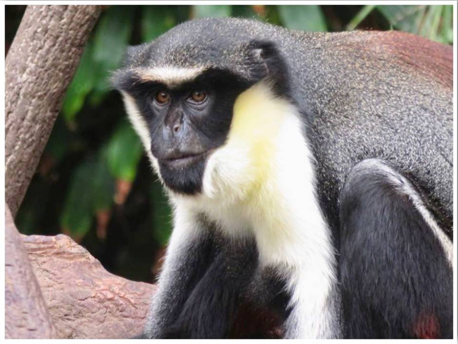 Monkey at Omaha's Henry Doorly Zoo in Nebraska