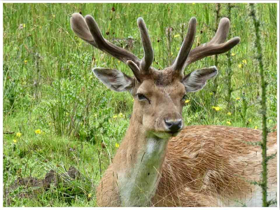 Bolderwood Deer Sanctuary New Forest UK