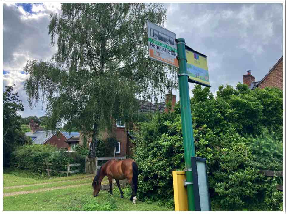 Pony in Burley Village New Forest