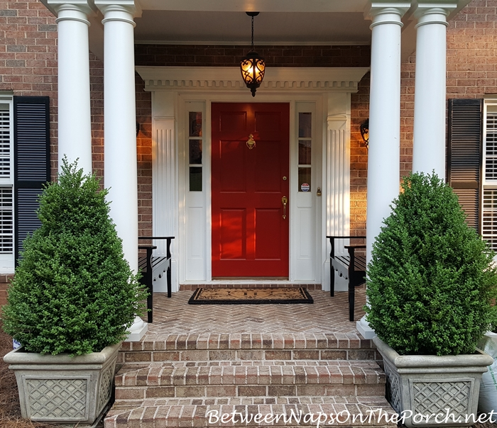 Landscaping with Boxwood Green Beauty Baby Gem Green