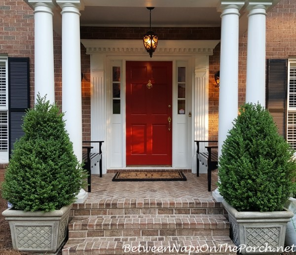 landscaping with boxwood green