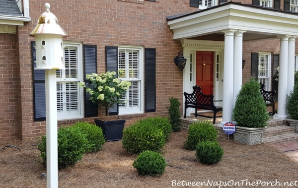 landscape makeover with boxwood