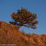 angle tree