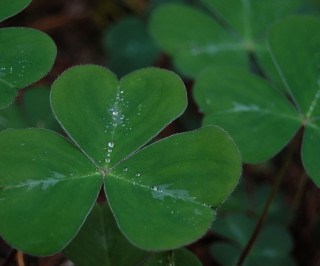 A look at origins of traditional Irish words: 4 literacy activities for St. Patrick's Day