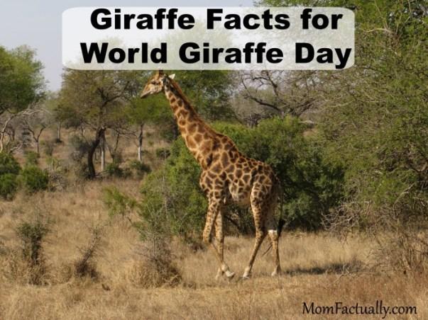 giraffefacts