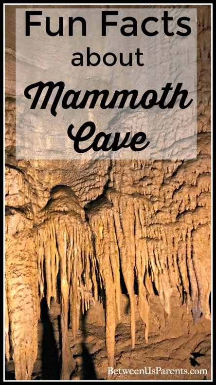 Fun Facts about Mammoth Cave