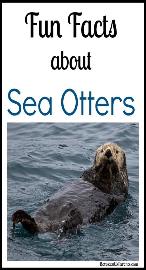 Fun Facts about Sea Otters