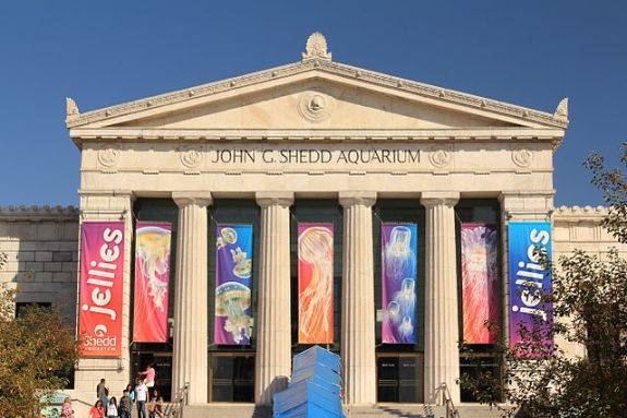 Favorite places in Chicago, including the Shedd Aquarium