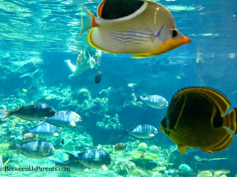 Rainbow Reef at Aulani
